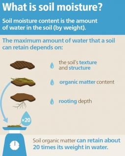Soils store and filter water