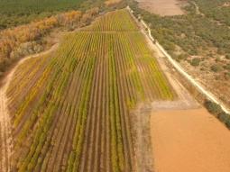 Visita al área demostrativa de la plantación de chopos